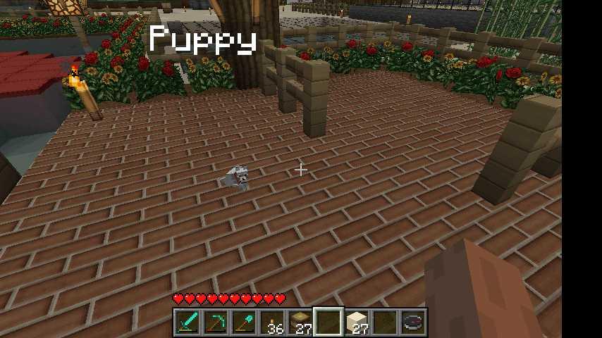 Puppyy.jpg