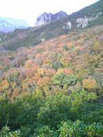 1小豆島の不思議な山大嶽1