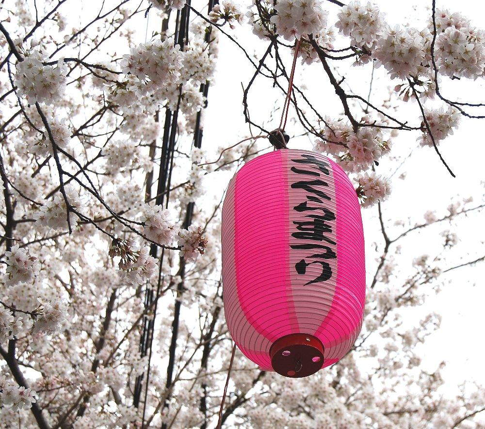 桜祭りは4月6日みたいです。桜ないです。