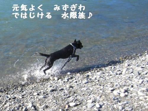 IMG_1069水際族