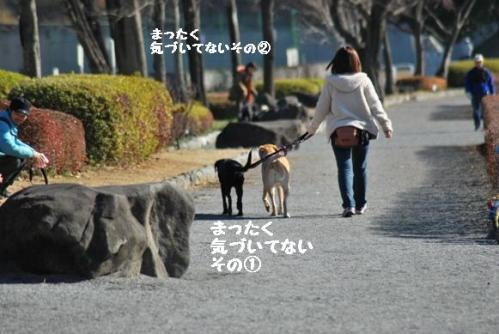 DSC_0037_20101229233859.jpg