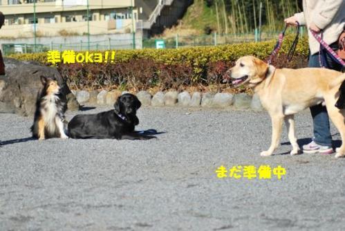 DSC_0064_20101230183918.jpg