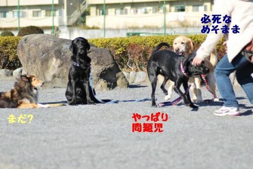 DSC_0069_20101230184551.jpg