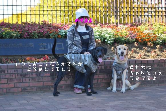 DSC_0216_20101114173943.jpg