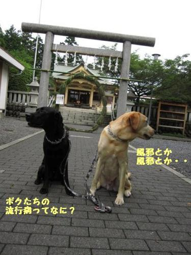 IMG_0929_20100630173136.jpg