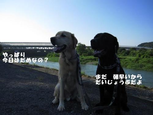 IMG_1241_20100725231504.jpg