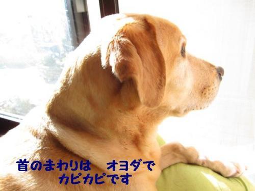 IMG_1956_20101023175636.jpg