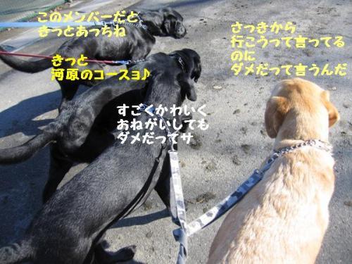IMG_244620101215.jpg
