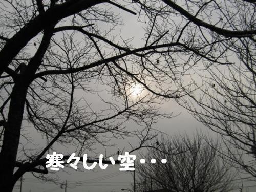 IMG_2460.jpg