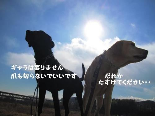 IMG_27162011126.jpg