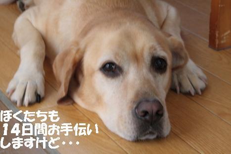 IMG_5627_20100914150421.jpg