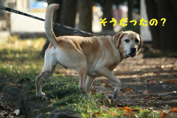 IMG_9247.jpg