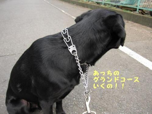 IMG_9611_20100323173549.jpg