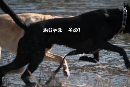IMG_98832011128.jpg