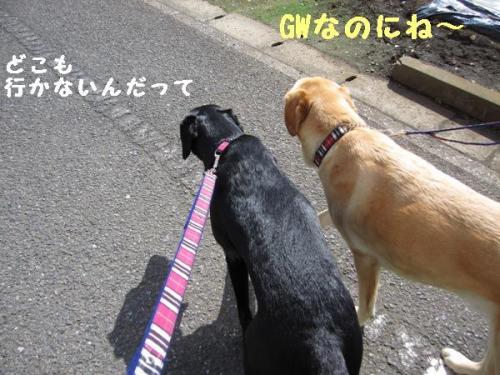 IMG_9940.jpg