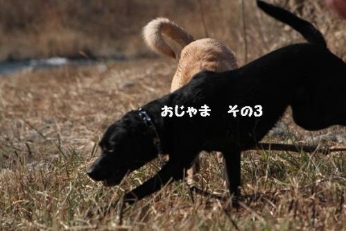 IMG_99452011128.jpg