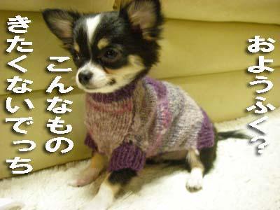 5-11-hany-セーター