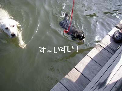 5-11-hany-泳ぐ