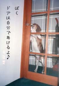 あけま~す!