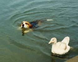 ドンとももの水泳部