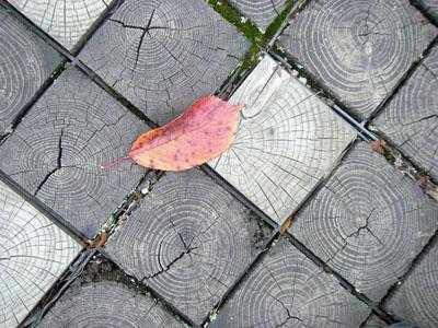 橋の上の枯れ葉