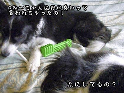 ビッキーの歯磨き1