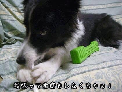 ビッキーの歯磨き2