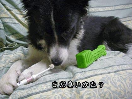 ビッキーの歯磨き5