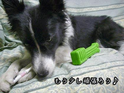 ビッキーの歯磨き6