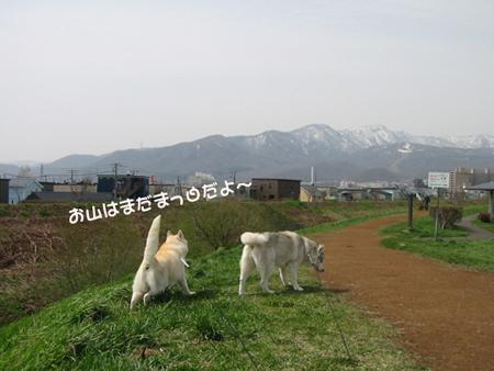 15_20100508004342.jpg