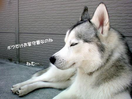 5_20100508004128.jpg