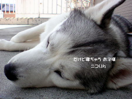 7_20100508004251.jpg