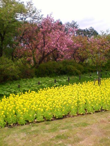 俣野別邸庭園1