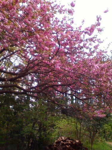 俣野別邸庭園3