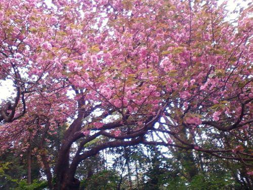 俣野別邸庭園5