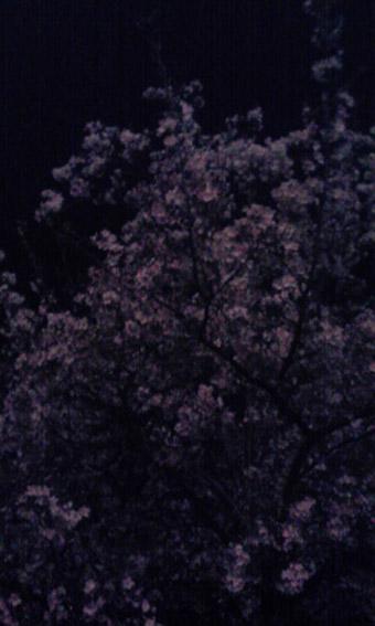 sakura-at-horikawa.jpg