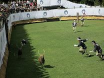 逃げる鹿 追う人間