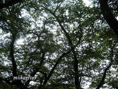 20100724someiyosino.jpg