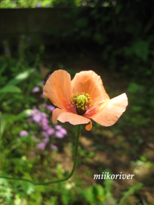 nagamihinagesi100501.jpg
