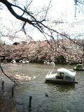 swan.jpeg