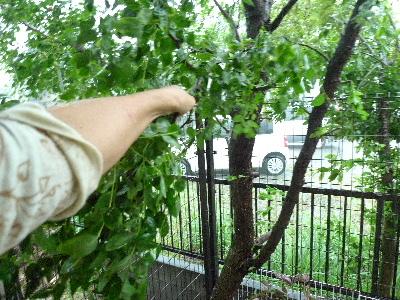 2011_0921ナッキー0010