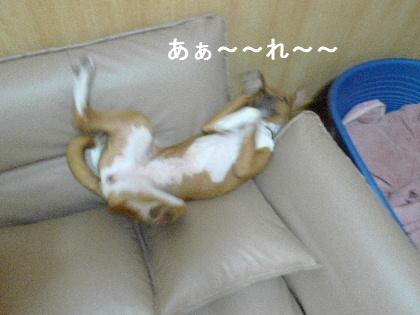 2011_0918ナッキー0030