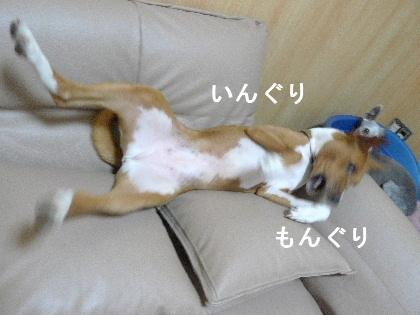 2011_0918ナッキー0026