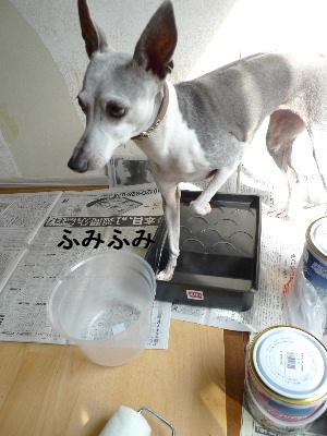 2011_0924ナッキー0019