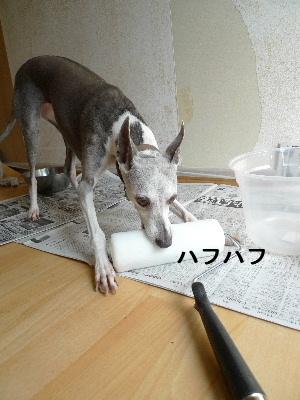 2011_0924ナッキー0020