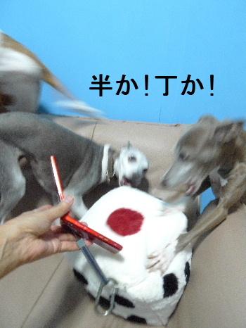 2011_0924ナッキー0052