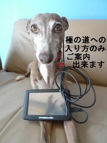 2011_0927ナッキー0009