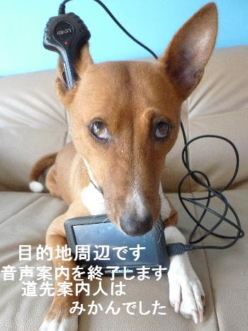 2011_0927ナッキー0011