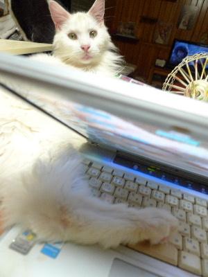 2011_0927ナッキー0030