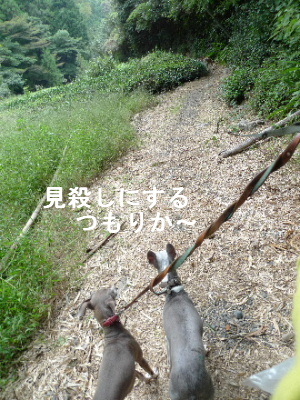 2011_0929ナッキー0077
